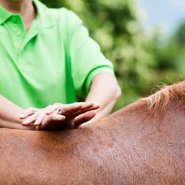 horse-adjustment-sq-375